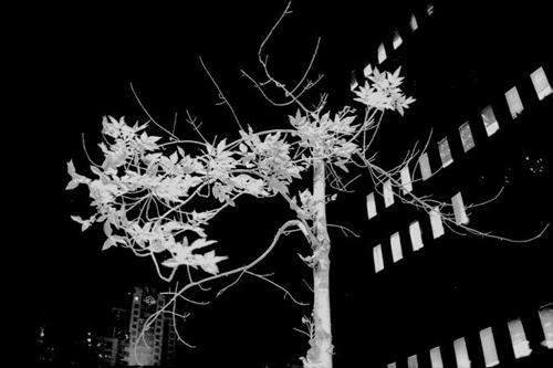 Noir Architecture - Hamish Robertson